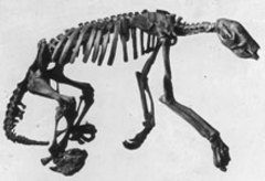 Caption: Skeletal remains of a Shasta ground sloth., Credit: The Jesse Earl Hyde Collection, Case Western Reserve University