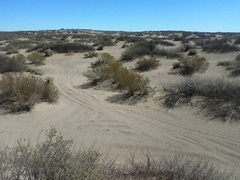 Caption: The Dunes at Bowie, Credit: Joseph Moore