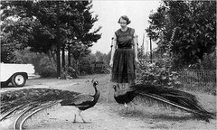 Caption: Flannery O'Connor in 1962, Credit: Joe McTyre/Atlanta Constitution