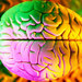 Caption: The brain, Credit: guardian.co.uk