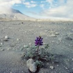 Caption: Life returns to Mt. St. Helens, Credit: pbs.org/nova