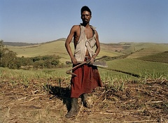 Caption: Sugarcane Harvester, Credit: Zwelethu Mthethwa, photographer