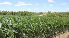 Quest-recycling-corn_field640-300x169_medium