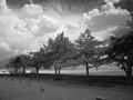Graveyard_online_small
