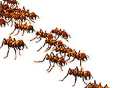 Caption: Swarm in Here, Credit: Seth Shostak