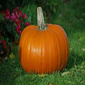 Rsz_pumpkin_small
