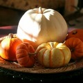 725-harvest_season_guords_small