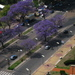 Caption: Jacaranda is Spring time