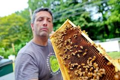 Caption: Andrew Coté holds up a panel of bees., Credit: Chion Wolf