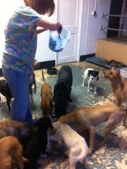 Caption: Amy Boortz feeds rescue dogs at the school where she lives. , Credit: Mary Helen Miller
