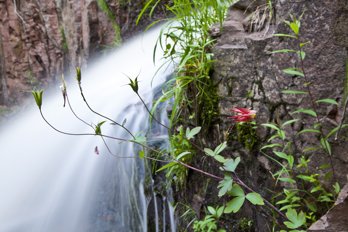 Caption: Flowers near Kadunce Creek, Credit: Stephan Hoglund