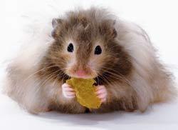 Caption: Not my neighbor's hamster.