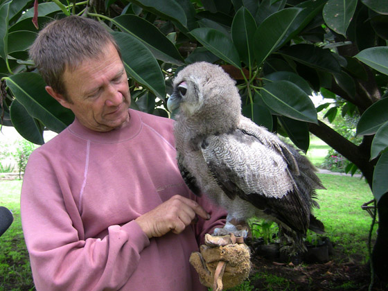 PRX » Piece » Giant Baby Verreaux Eagle Owl