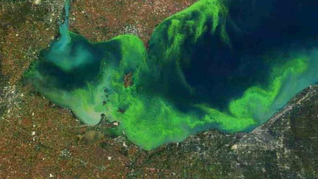 Caption: Satellite image of 2010 algage bloom, Credit: NOAA/NASA