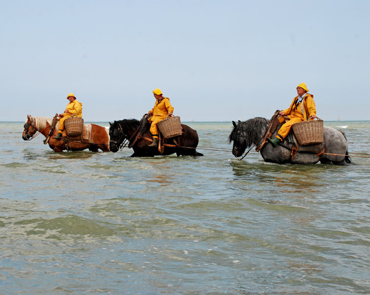 Caption: Shrimp fishing from horseback in Belgium, Credit: UNESCO