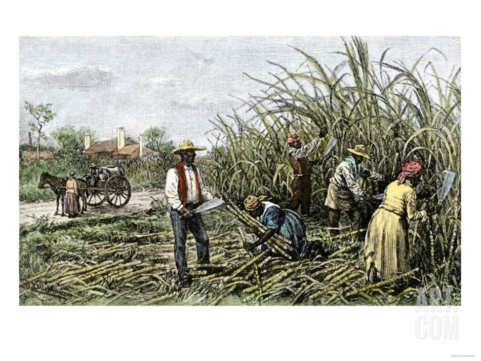 Caption: Enslaved people in sugarcane field