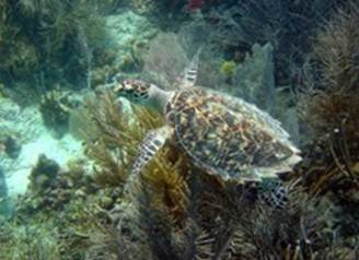 Caption: Sea turtle, Credit: Copyright Caroline Rogers