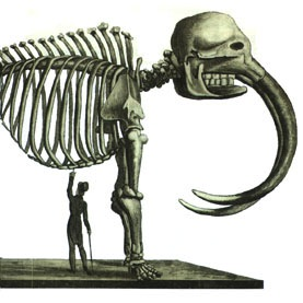 Caption: Charles Peale's Mastodon skeleton, by Édouard de Montulé (1816)