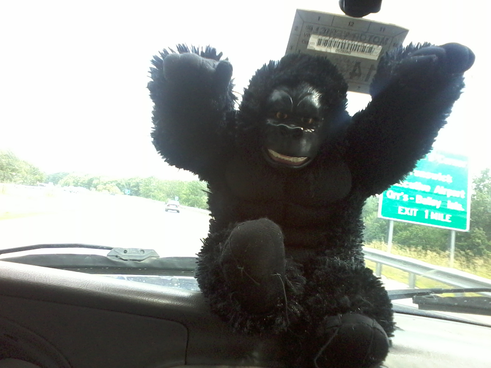 Caption: Maybe the gorilla taught the person to sign.., Credit: Susan Cook