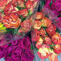 Valentine_s_day_small