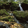 Shenandoahnationalpark_small
