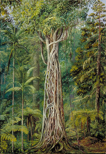 Caption: Painting 781  Poison Tree strangled by a Fig, Queensland, Credit: Marianne North