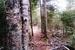 Caption: Lake County trail in the woods, Credit: Martha Marnocha