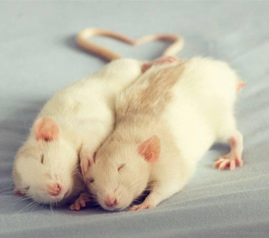 ネズミ 15