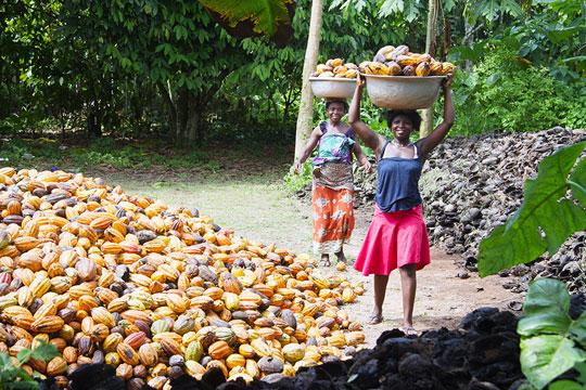 Caption: Cocoa Farmers