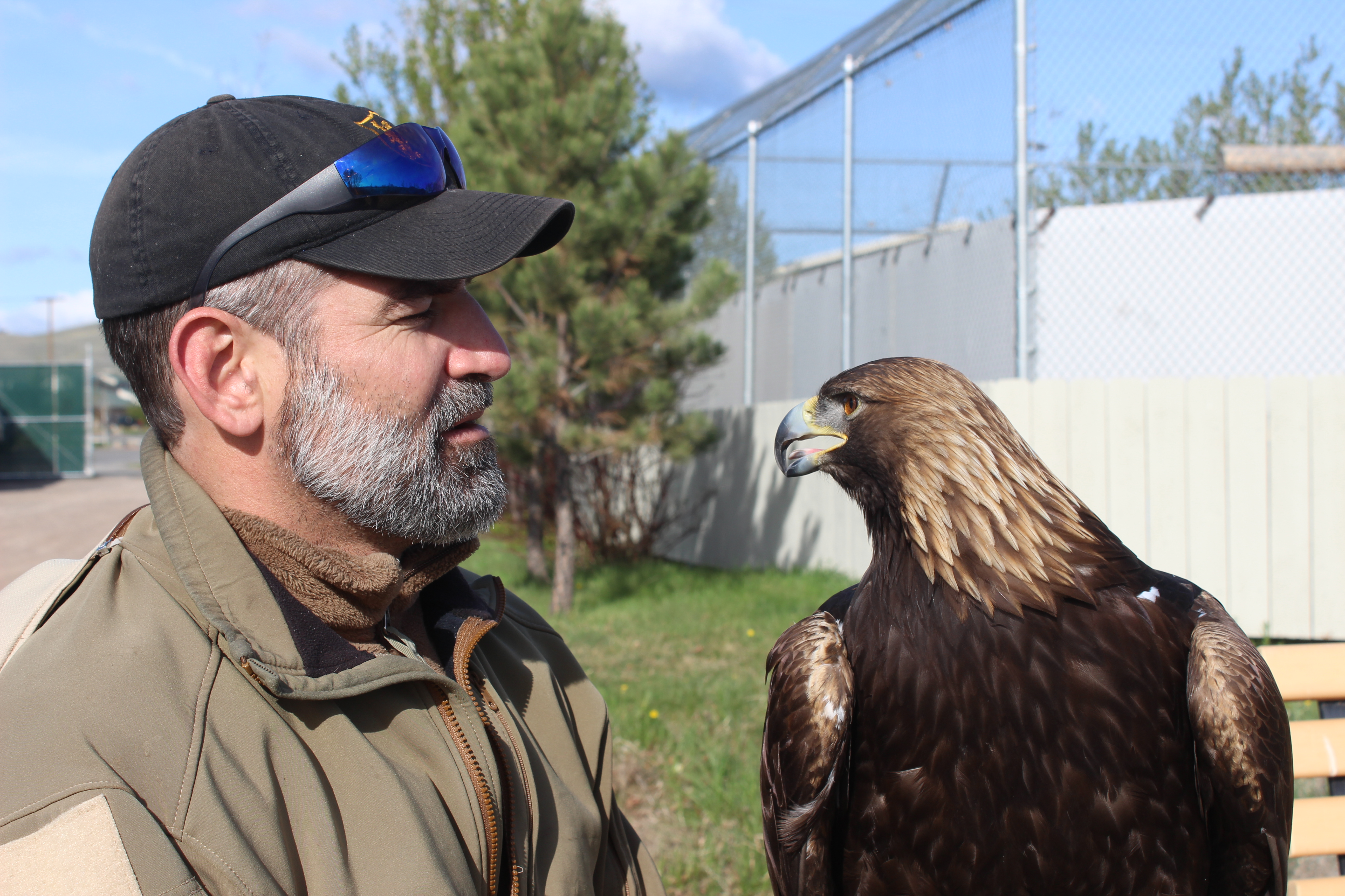 Caption: Scott Hannon with Eagle, Helena, MT, Credit: Clay Scott