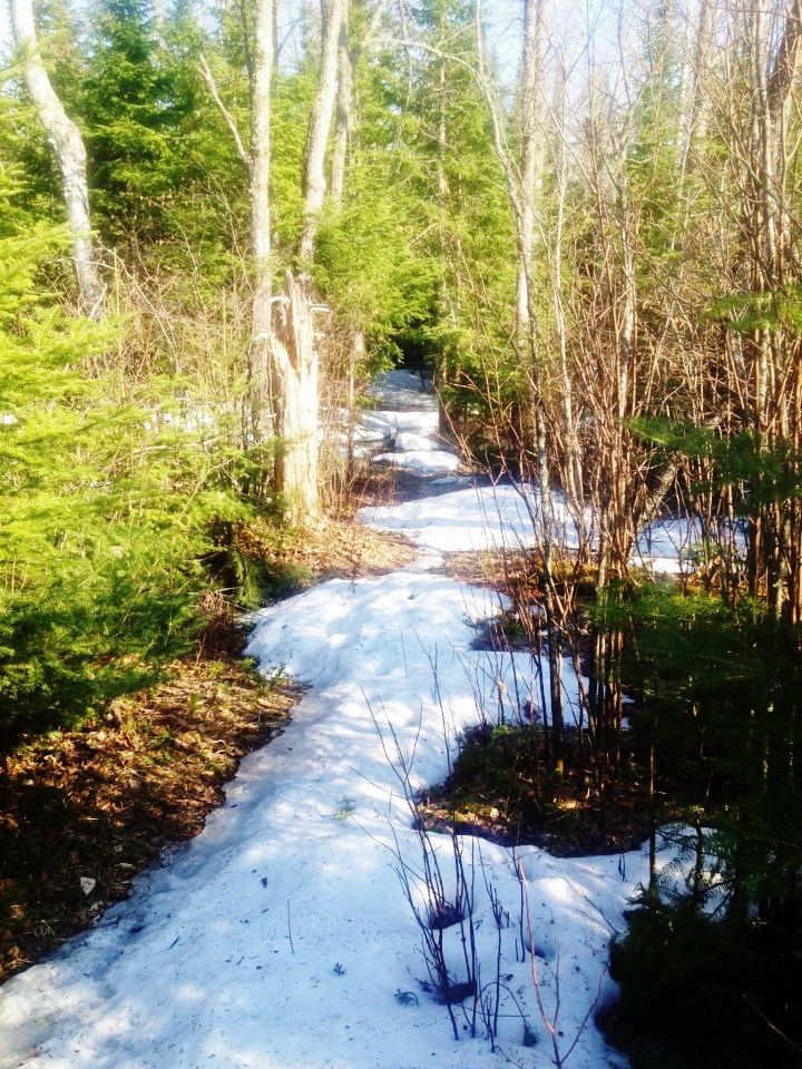 Caption: Lake County trail, Credit: Martha Marnocha