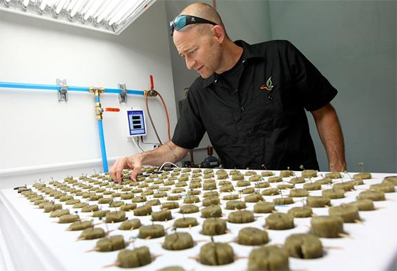 Caption: Consultant Jonathan Hunt checks marijuana seedlings on the Flandreau Santee Sioux Reservation, Credit: Flandreau Santee Sioux Tribe