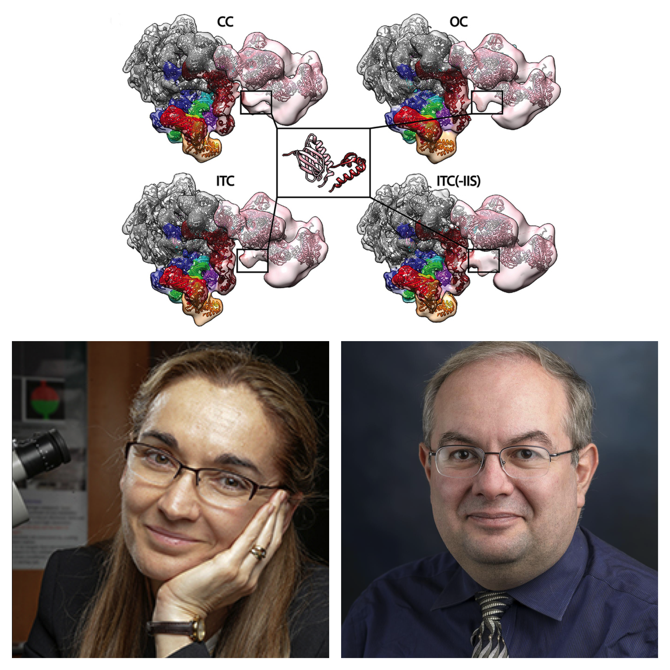 Caption: Eva Nogales, UC Berkeley and Ivaylo Ivanov, Georgia State University, make discoveries on one of life's most important 'living machines.'