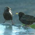 Birdbath-frozen-john-ryan-285_small