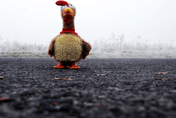 Caption: A chicken doll looks up at the sky as if to expect it to fall., Credit: Bailey Weaver/Flickr