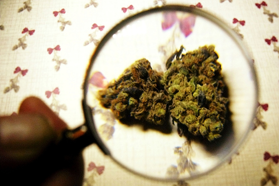 Caption: A magnifying glass is held over a marijuana bud., Credit: Tanjila Ahmed/Flickr