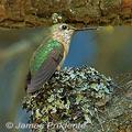 Ruhu-nest-james-prudente-285_small