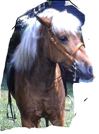 Caption: MY Pony, Credit: E.V. Cook
