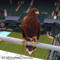 Wimbledon-rufus-wayne-davis-285_small