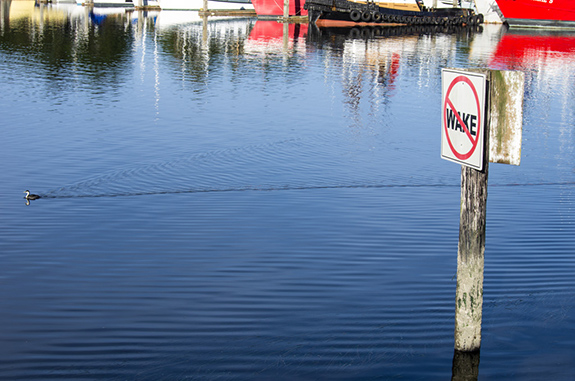 Caption: A duck defiantly paddles by a dock with a sign reading 'No Wake'., Credit: Charles Nadeau/Flickr