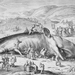 "Caption: ""Beached Whale"" by Jacob Matham (1589), Credit: Metropolitan Museum of Art"
