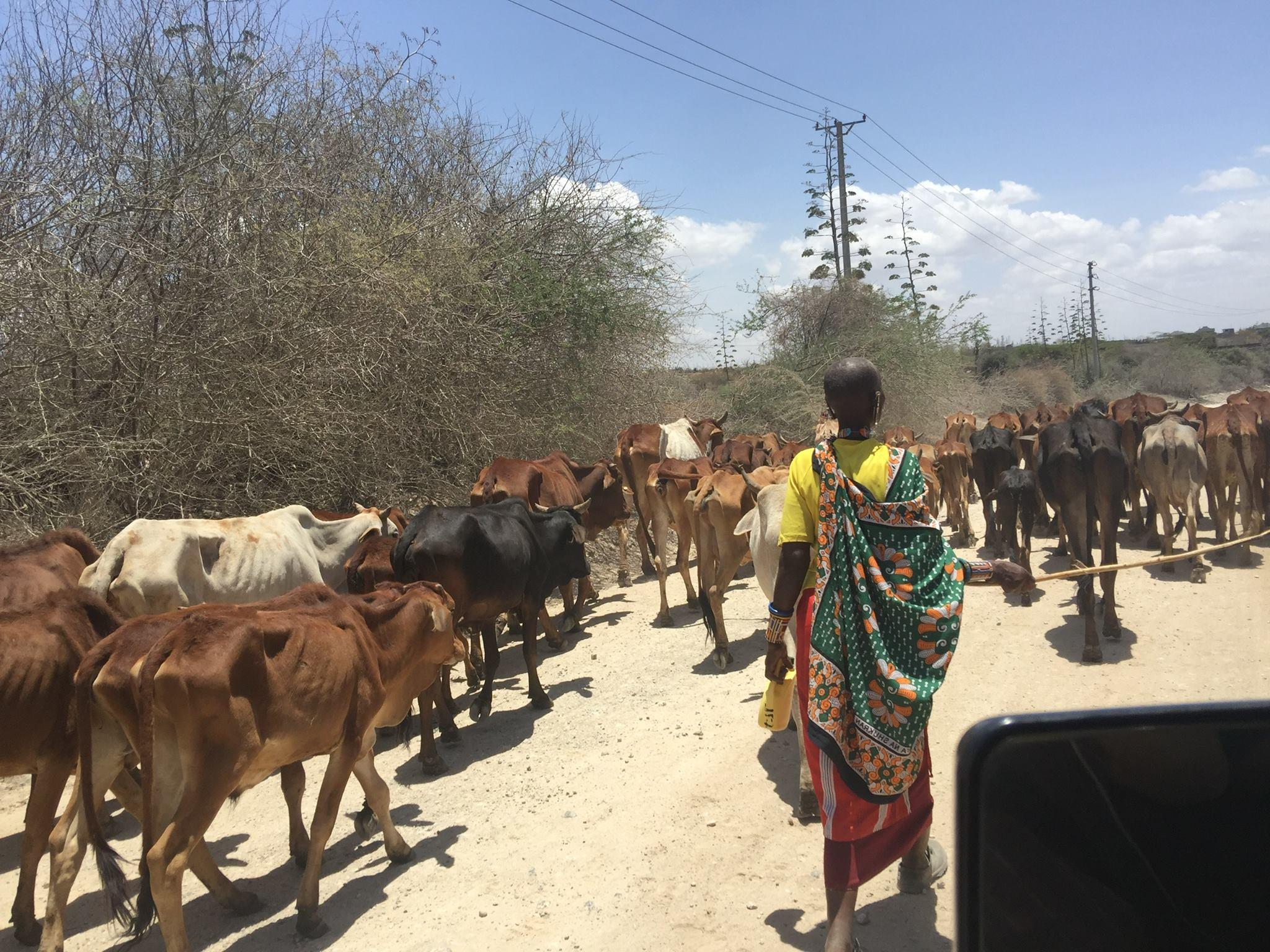 Caption: Kenya road, Credit: courtesy Bill Hansen