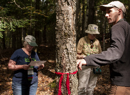 Caption: Stephen Handler discusses the projected fate of a yellow birch tree under climate change. , Credit: Samantha Harrington