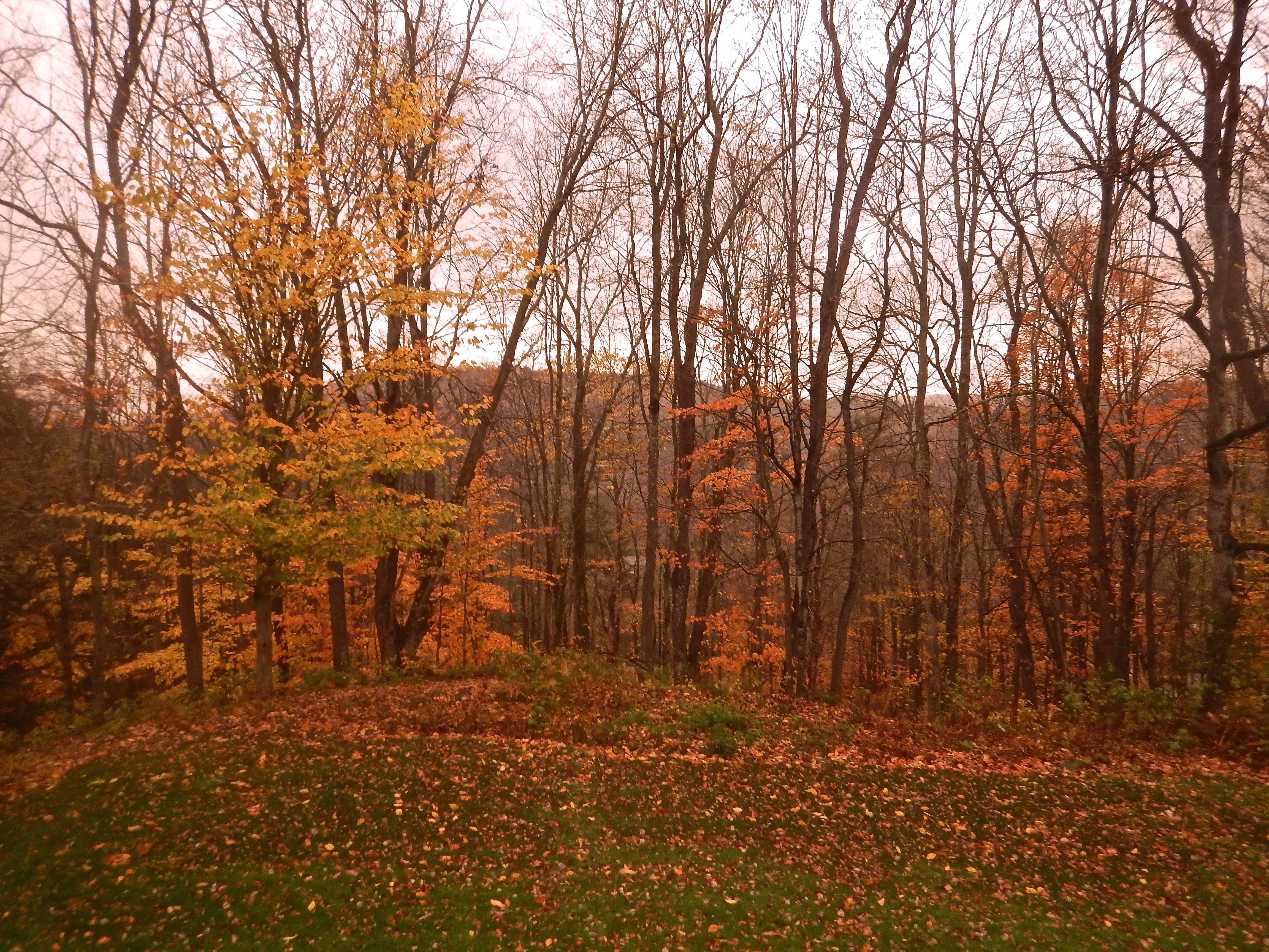 Caption: Late Autumn in VT