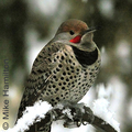 Freeze-flicker-mikeh-285_small