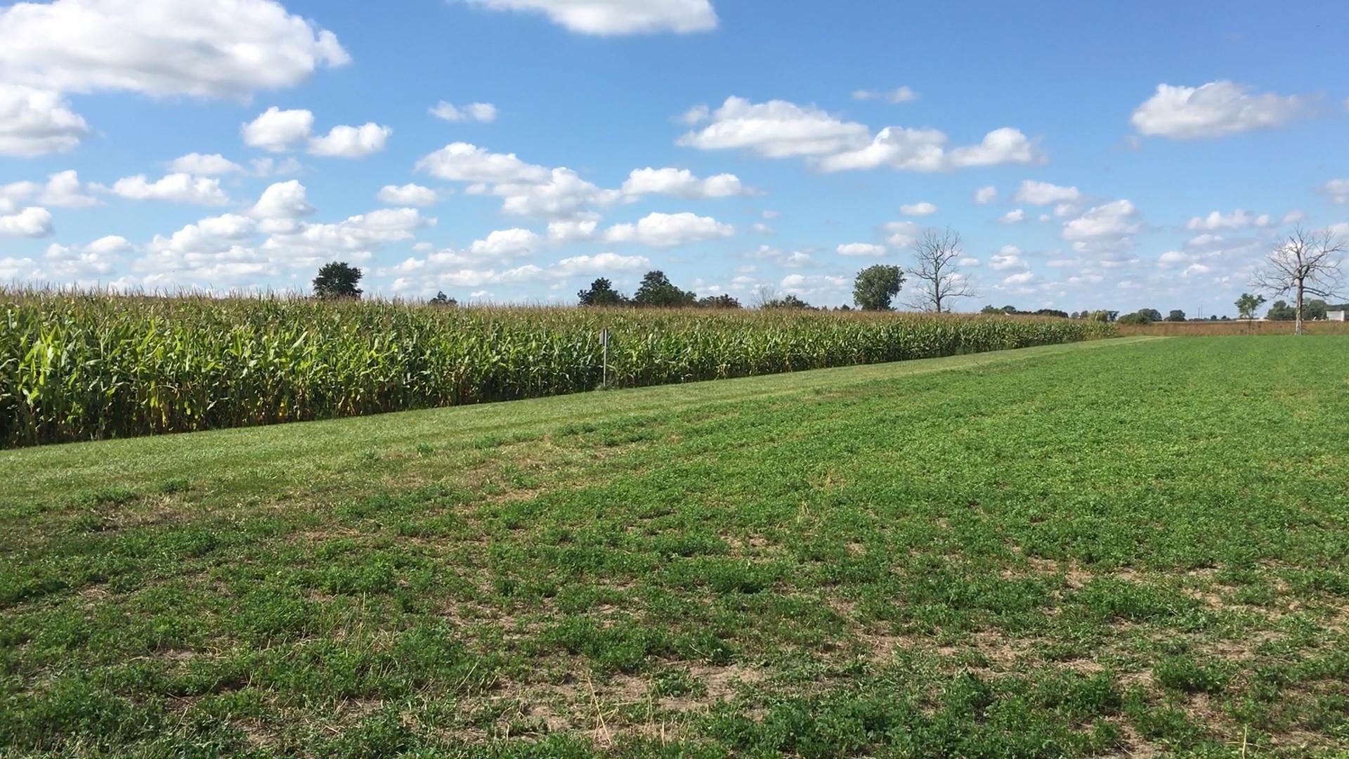Caption: A northwest Ohio farm, Credit: Elizabeth Miller/ideastream