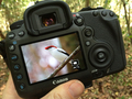 Bird_photo_on_iphone-700px_small