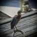 Caption: bird on the cape, Credit: Matthew Simonson