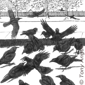 Crow-funeral-tony-angell-285_small