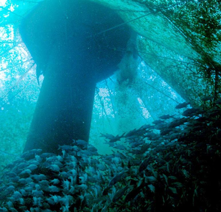 Caption: Offshore aquaculture operation, Credit: NMFS/NOAA